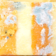 Schimmelkäse bei Anti Pilz Diät