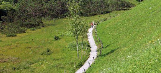Regelmäßige Spaziergänge helfen beim Vorbeugen und beim Dehnungsstreifen loswerden.