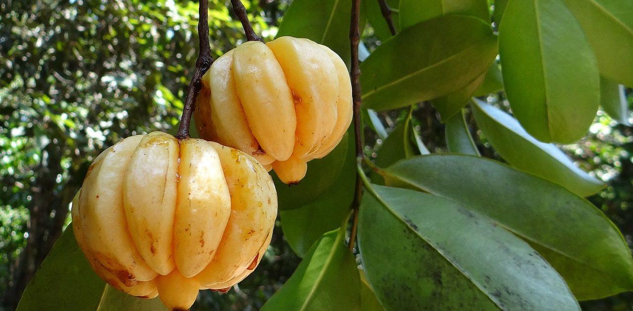 Angeblich hat Garcinia Cambogia keine Nebenwirkungen – ob das stimmt sollen die Erfahrungen zeigen.