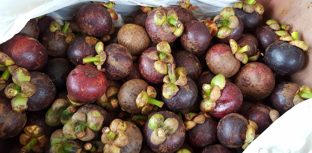 Aufgrund der angeblich guten Wirkung sind die Mangostan Früchte sehr beliebt