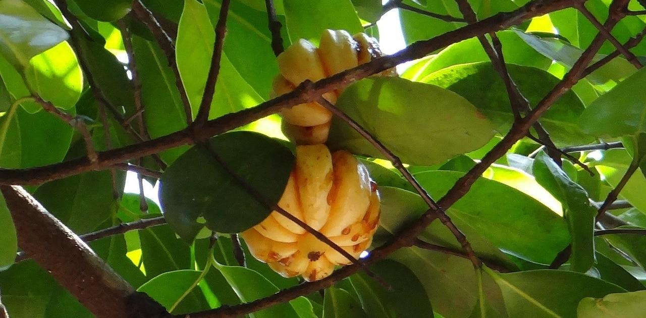 Da nur natürliche Zutaten bei Pure Cambogia Ultra verwendet werden, sollen keine Nebenwirkungen auftreten.