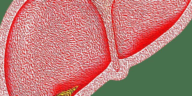 Leberdiät
